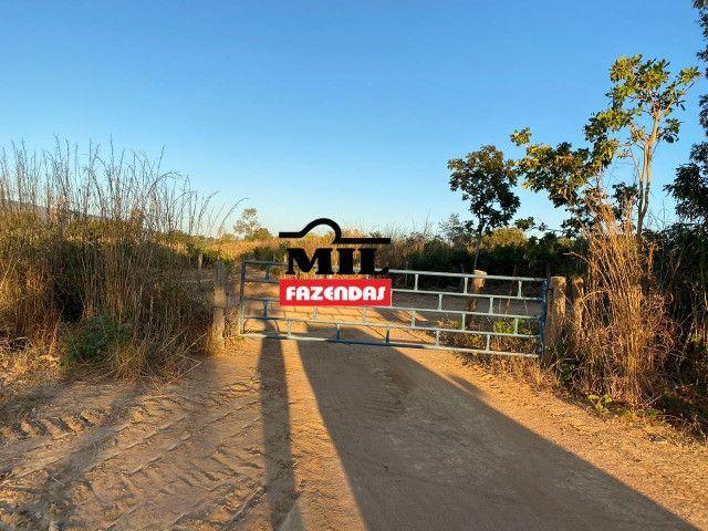 Fazenda 236 alqueires ( 1142 hectares ) Jaú-TO - Foto 16