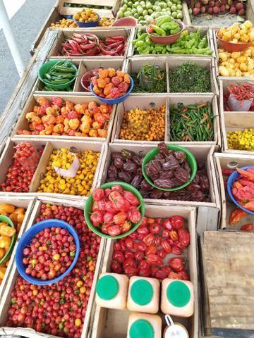 Pimentas Selecionadas e sementes