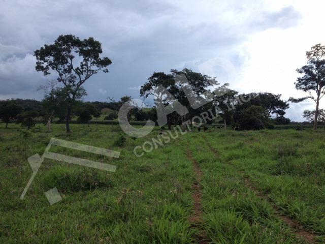 Fazenda de 10 alqueires para pecuária na região de Caldas Novas GO - Foto 4