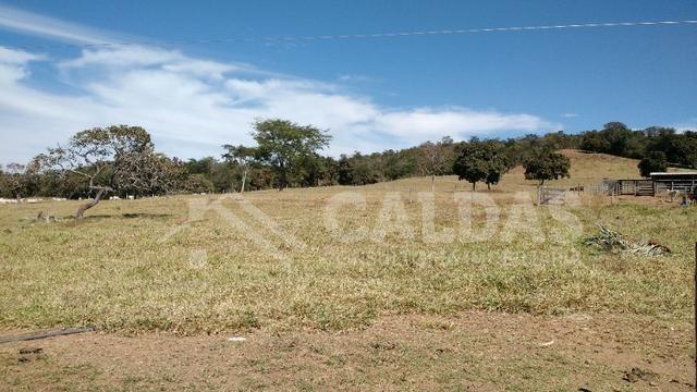 Fazenda de 10 alqueires para pecuária na região de Caldas Novas GO - Foto 9