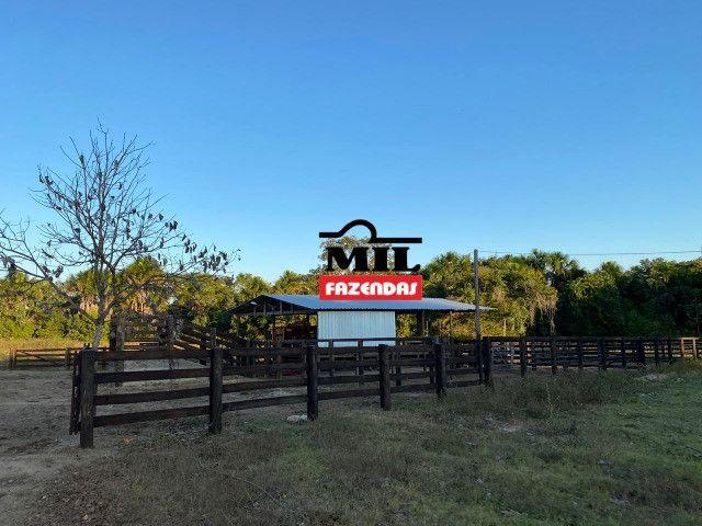 Fazenda 236 alqueires ( 1142 hectares ) Jaú-TO - Foto 4