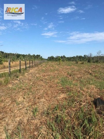 Fazenda à venda, com 310 hectares no município de Porto Velho/RO - Foto 10