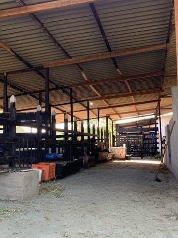 Sitio/Fazenda em Passira, Pernambuco. 12,7 hectares. - Foto 16