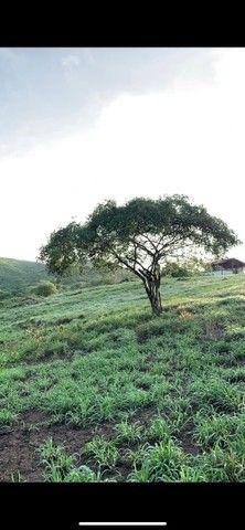 Sitio/Fazenda em Passira, Pernambuco. 12,7 hectares. - Foto 2