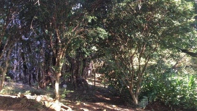 Fazenda 23 Alqueires, Anápolis-GO - Foto 2