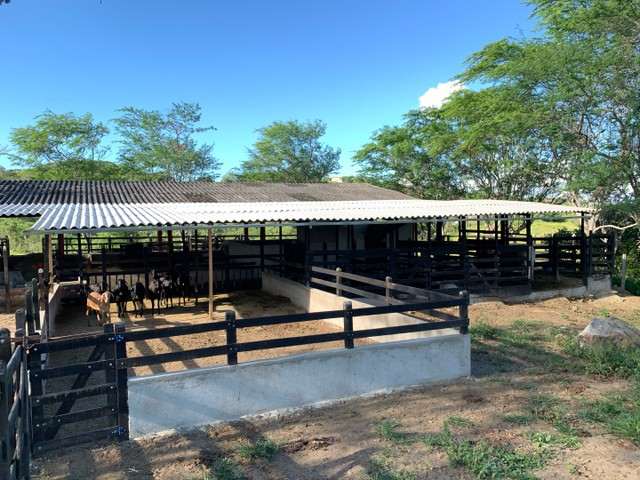 Sitio/Fazenda em Passira, Pernambuco. 12,7 hectares. - Foto 12