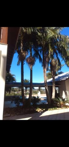 Vendo palmeiras reais - Foto 2