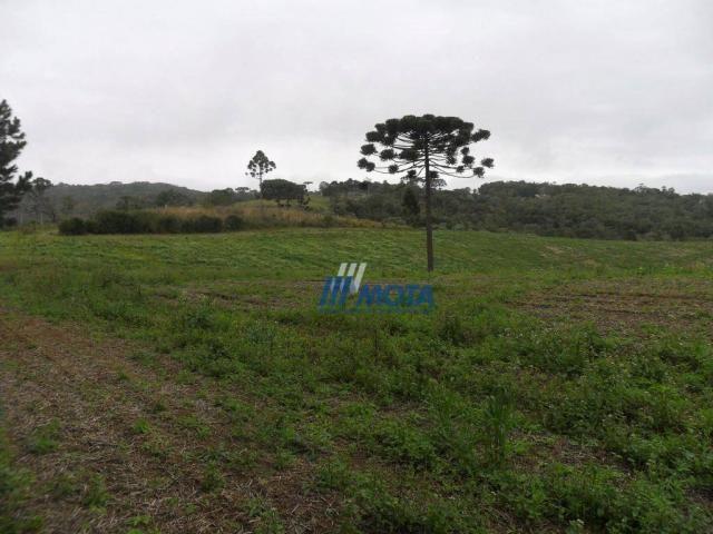 Fazenda rural à venda, roça nova, piraquara. - Foto 5