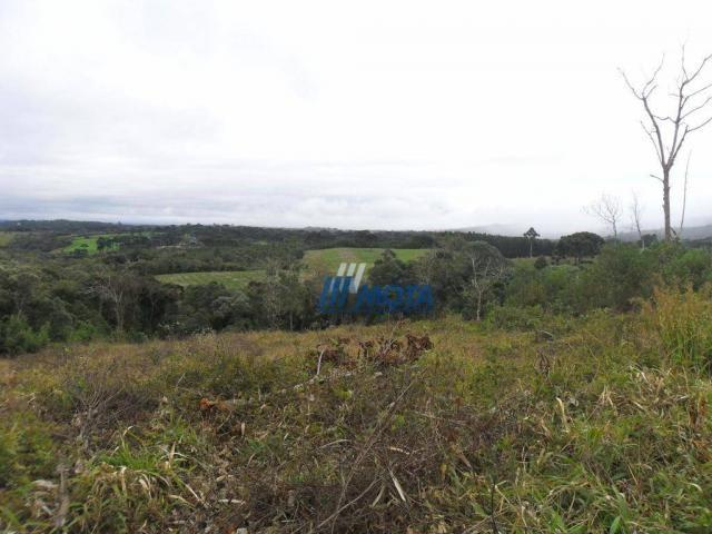 Fazenda rural à venda, roça nova, piraquara. - Foto 13