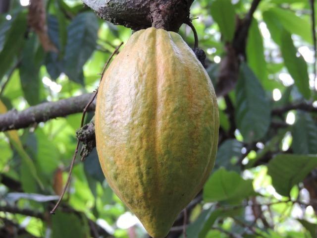 Vendo fazenda, excelente para plantar café ou eucalípto - Foto 19