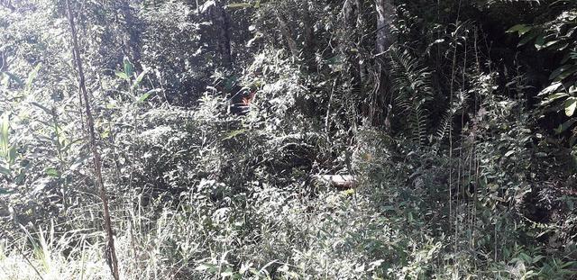 42 alqueires,,, são lourenço,,, da serra - Foto 13