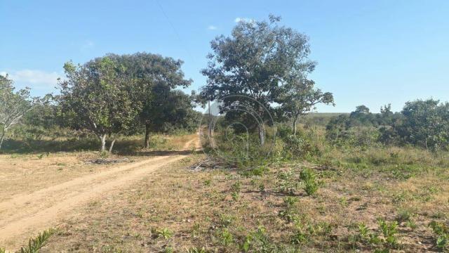 Chácara 7 hec na beira do asfalto estrada do manso à venda por r$ 120.000,00 - Foto 7