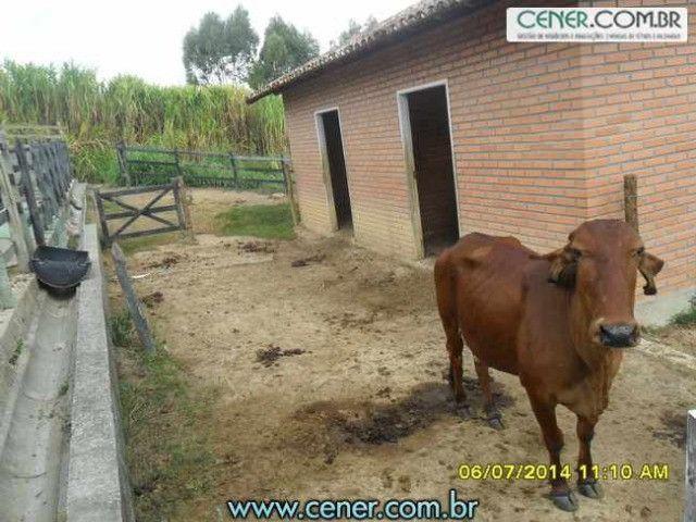 1560/Maravilhosa fazenda de 220 ha com linda sede - ac imóveis em BH - Foto 14