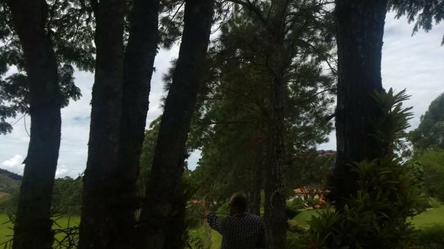Fazenda de 280 alqueires no Sul de Minas Gerais - Foto 7