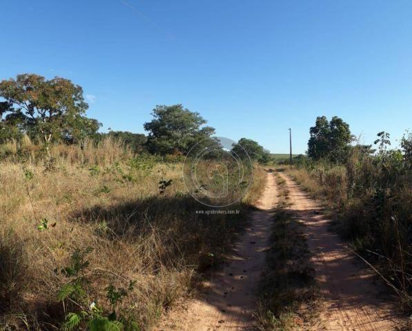 Chácara 7 hec na beira do asfalto estrada do manso à venda por r$ 120.000,00 - Foto 4