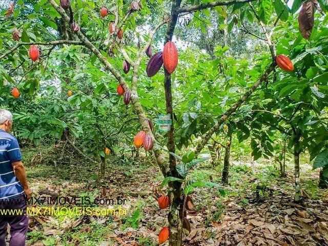 Ubaitaba. Fazenda mista de 160 Hectares, rica em água. - Foto 8