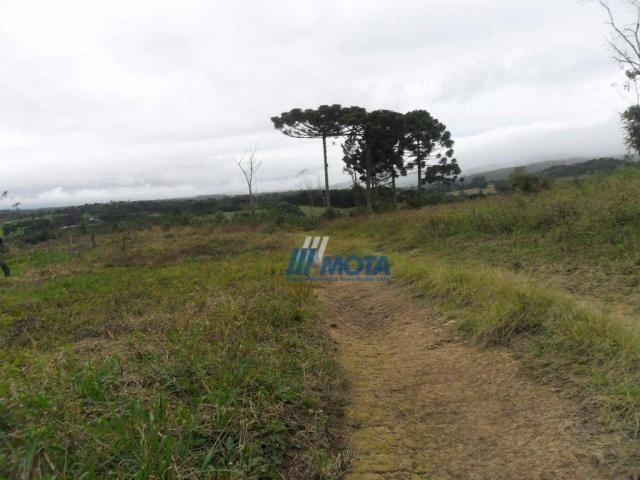 Fazenda rural à venda, roça nova, piraquara. - Foto 9