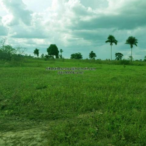 Fazenda 194 hectares nordeste mt nikolaiimoveis