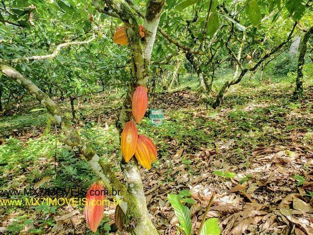 Ubaitaba. Fazenda mista de 160 Hectares, rica em água. - Foto 12