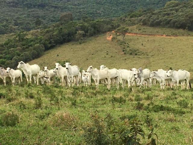 Terreno rural de 64 hectares no Sul de Minas Gerais, Baependi. (fazenda, sítio, terras) - Foto 6