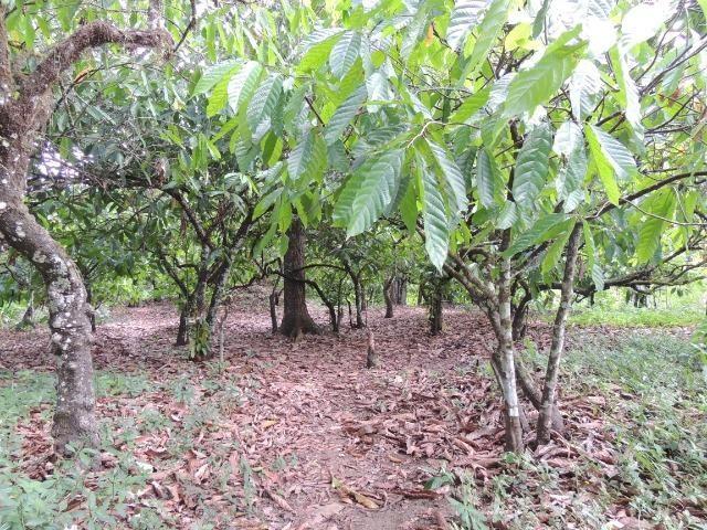 Vendo fazenda, excelente para plantar café ou eucalípto - Foto 6