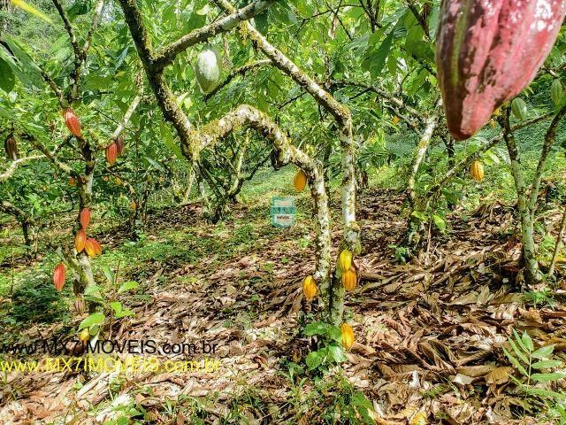 Ubaitaba. Fazenda mista de 160 Hectares, rica em água. - Foto 11