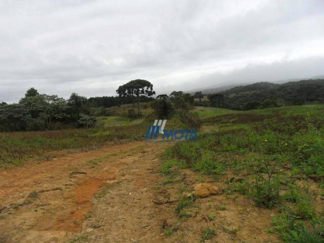Fazenda rural à venda, roça nova, piraquara. - Foto 16