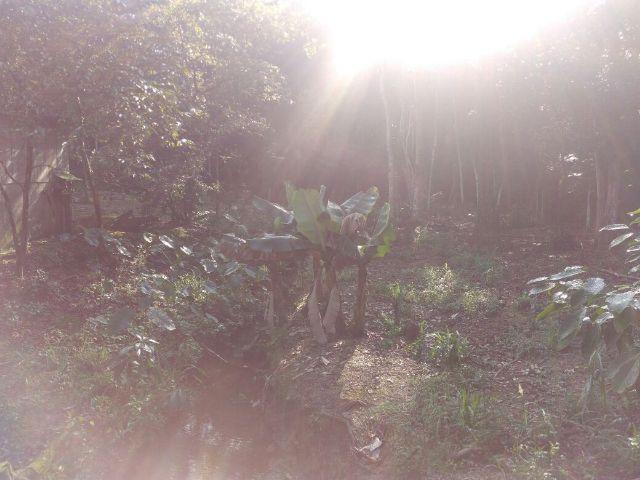 Chácara Linda Em Guaramirim - Foto 6