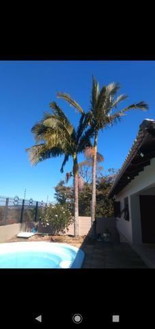 Vendo palmeiras reais - Foto 3