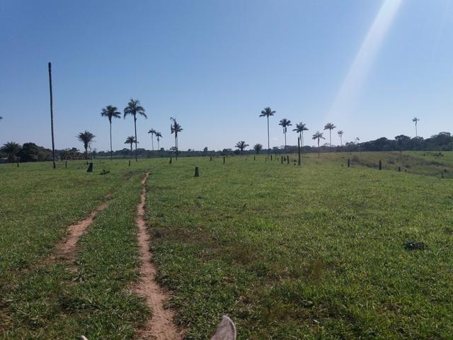 Vende - se uma fazenda
