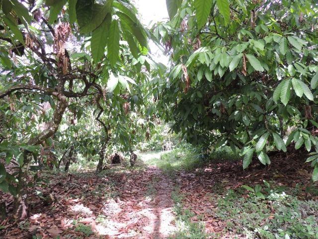 Vendo fazenda, excelente para plantar café ou eucalípto - Foto 11