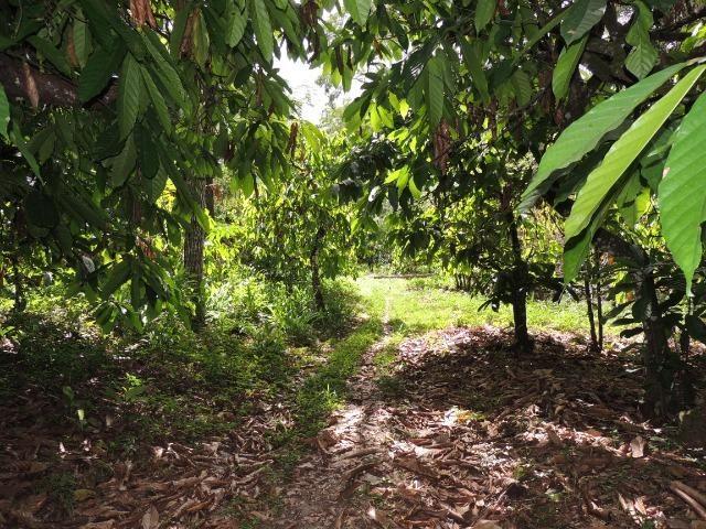 Vendo fazenda, excelente para plantar café ou eucalípto - Foto 8