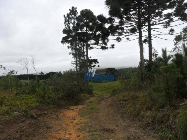 Fazenda rural à venda, roça nova, piraquara. - Foto 10
