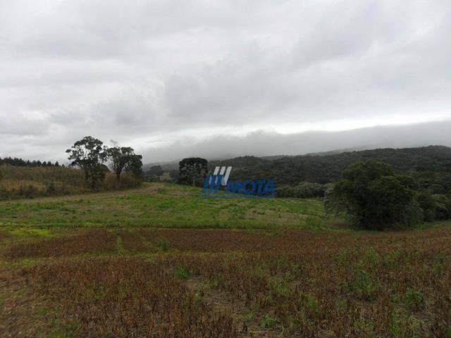Fazenda rural à venda, roça nova, piraquara. - Foto 8