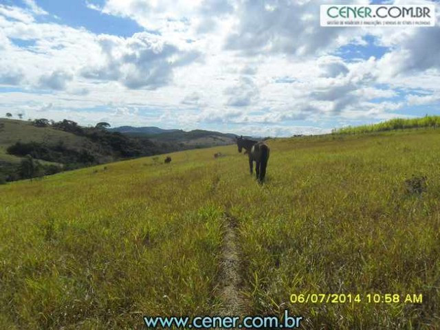 1560/Maravilhosa fazenda de 220 ha com linda sede - ac imóveis em BH - Foto 4