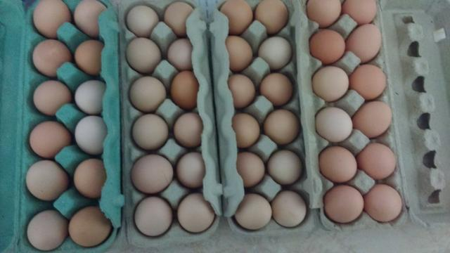 Ovos caipira galos e galinhas - Foto 3
