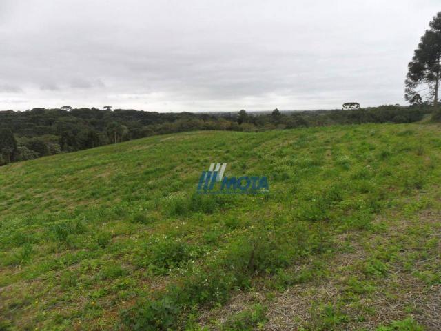 Fazenda rural à venda, roça nova, piraquara. - Foto 4