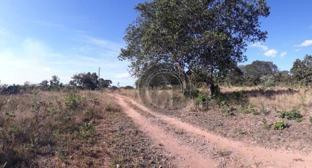Chácara 7 hec na beira do asfalto estrada do manso à venda por r$ 120.000,00 - Foto 3