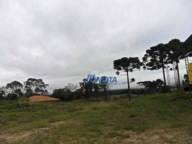 Fazenda rural à venda, roça nova, piraquara. - Foto 11