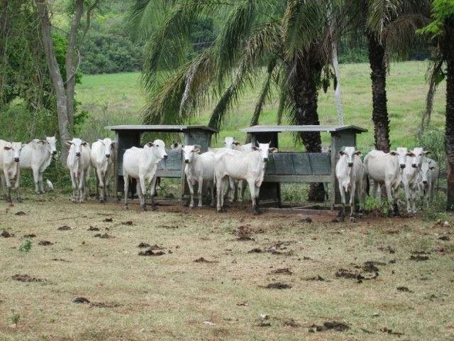Fazenda em Corumbá-MS com 7.597 ha produtiva e em funcionamento