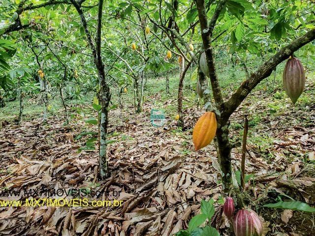 Ubaitaba. Fazenda mista de 160 Hectares, rica em água. - Foto 13