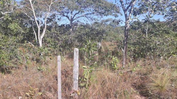 Chácara 7 hec na beira do asfalto estrada do manso à venda por r$ 120.000,00 - Foto 6