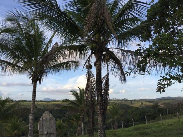 Fazenda à venda a 275km de Salvador - Foto 5