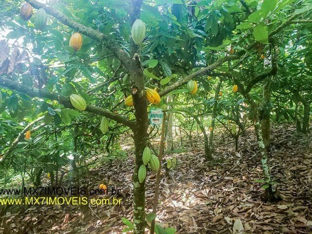 Ubaitaba. Fazenda mista de 160 Hectares, rica em água. - Foto 15