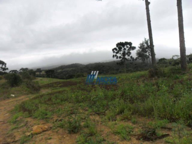 Fazenda rural à venda, roça nova, piraquara. - Foto 20