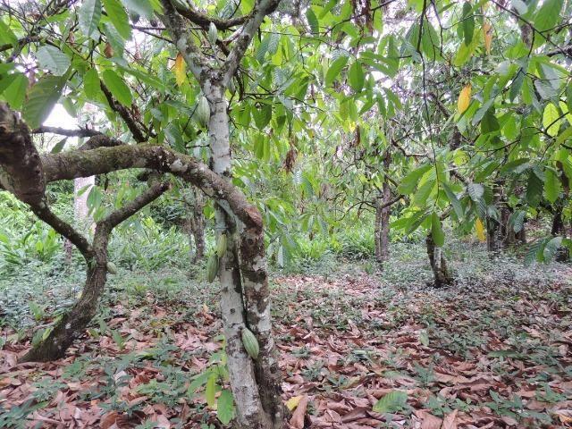Vendo fazenda, excelente para plantar café ou eucalípto - Foto 5