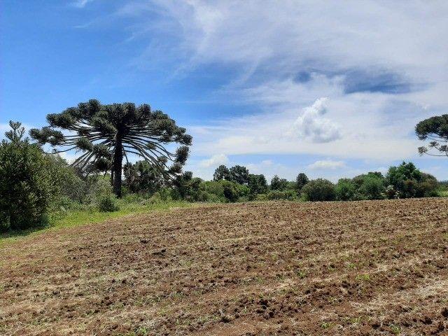 Terreno à venda em Urupema - Foto 2