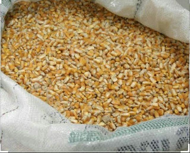 Milho Tipo exportação  - Foto 2