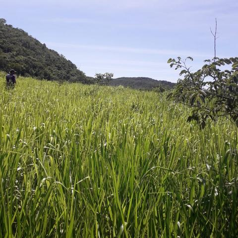 Fazenda Sítio Chácara Lote Terreno - Foto 2
