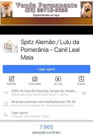 Conheça nosso canil de Lulu da Pomerânia / Spitz Alemão - Foto 2